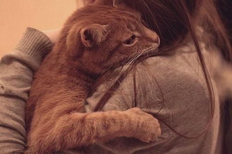 как лечат домашние коты