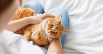 кошки лечат людей