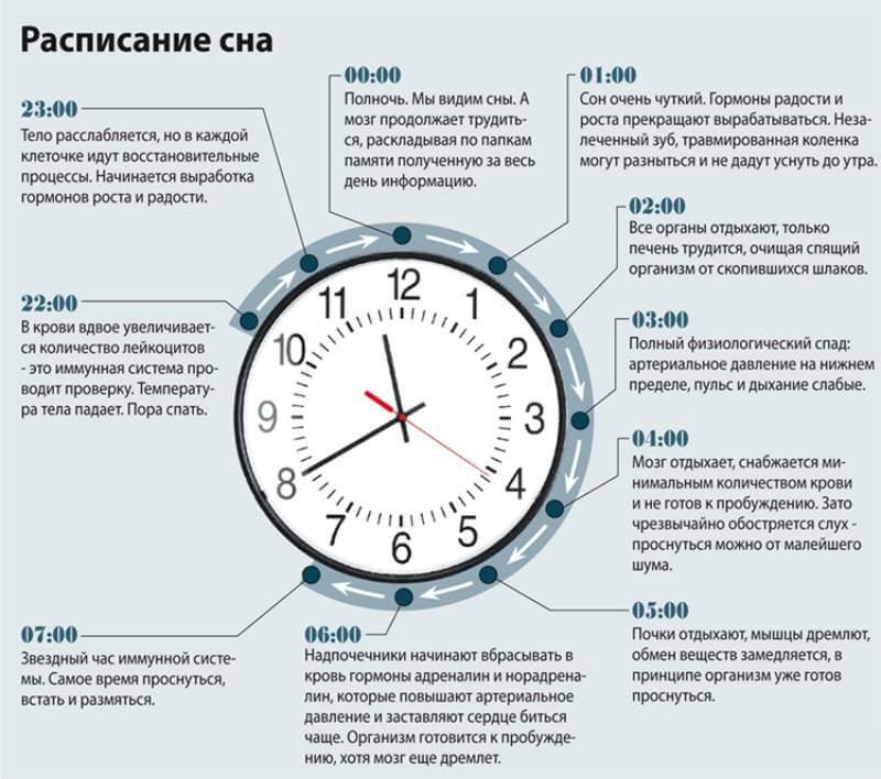 Что происходит в разные фазы сна
