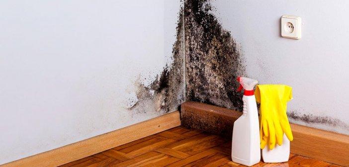 как избавиться от черной плесени на стене дома